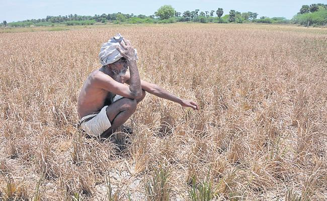 Crisis In Our Agricultural Sector Is Unimaginable - Sakshi