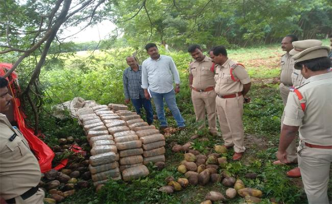 Cannabis Move in the Name of Coconut Bonds - Sakshi