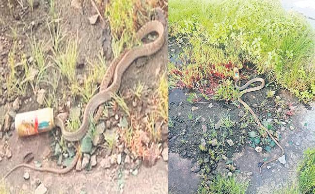 Snake Society in Hyderabad HCU - Sakshi