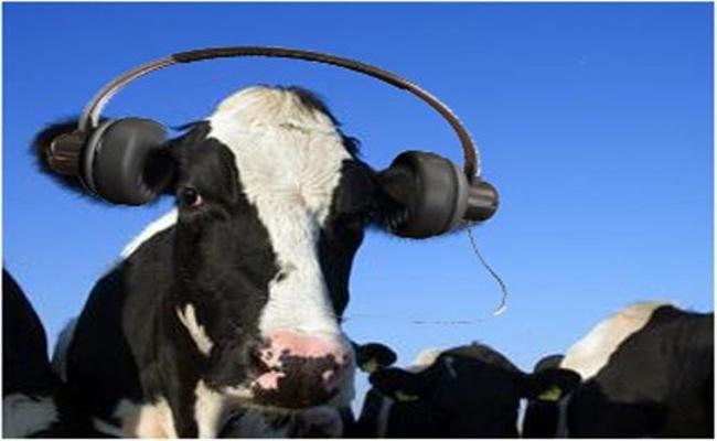 Cow Gave More Milk By Listening Music In Karimnagar - Sakshi