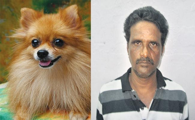 Thief Manthri Shankar Fear on Pomeranian Bried Dogs - Sakshi