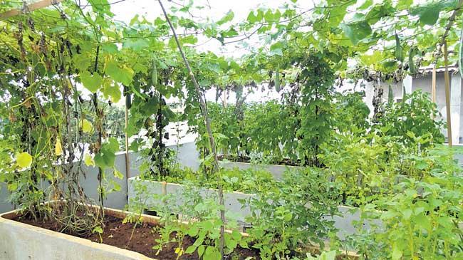 Cultivation of home crops - Sakshi