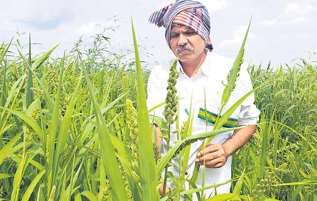small grains used to perfect health - Sakshi