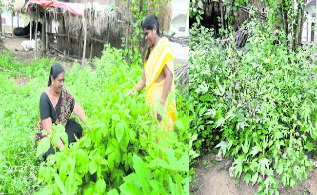 Garden For Vegetables in Kakinada Anganwadi Centre Krishna - Sakshi