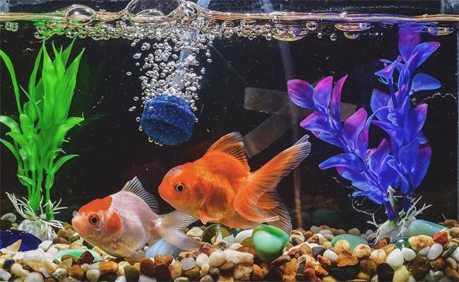 How To Maintain Aquarium With Easy Steps - Sakshi