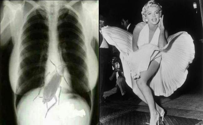 Do Not Believe This Bizarre Story Of Marilyn Monroes X ray - Sakshi