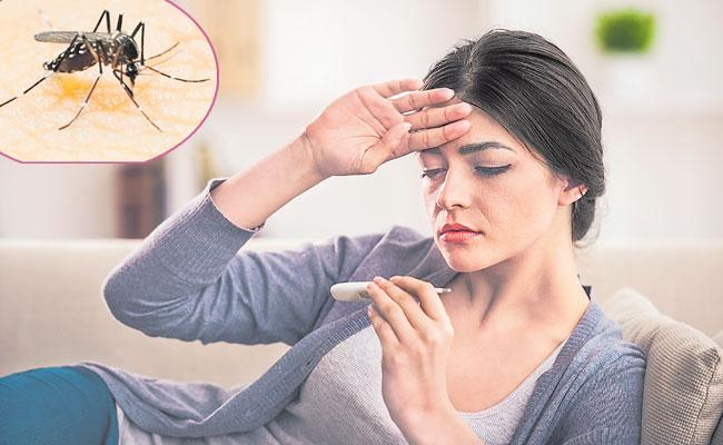Dengue Fever Is A Disease Caused By The Virus - Sakshi