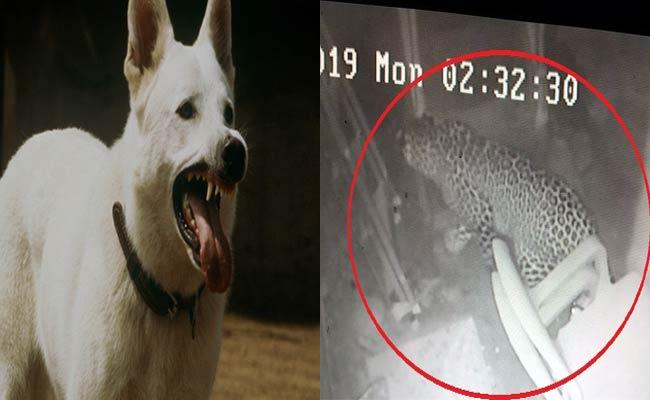 Leopard Enters House And Run Away With Pet Dog In Karnataka - Sakshi
