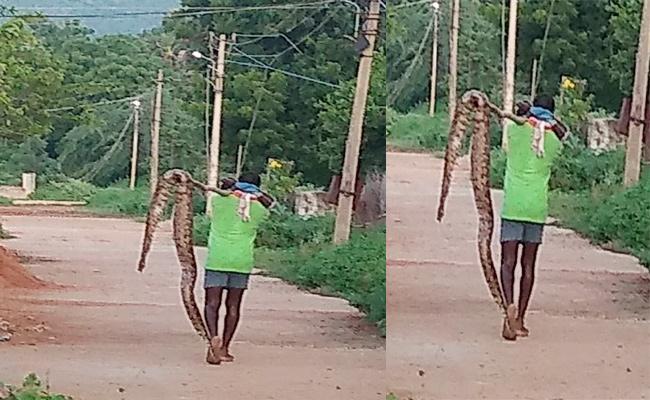 Python Killed Goats in Chittoor - Sakshi
