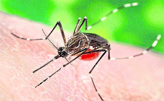 Dengue Cases File in Guntur - Sakshi