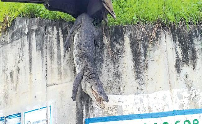 Crocodile Stuck Over Bridge In Nizamabad - Sakshi