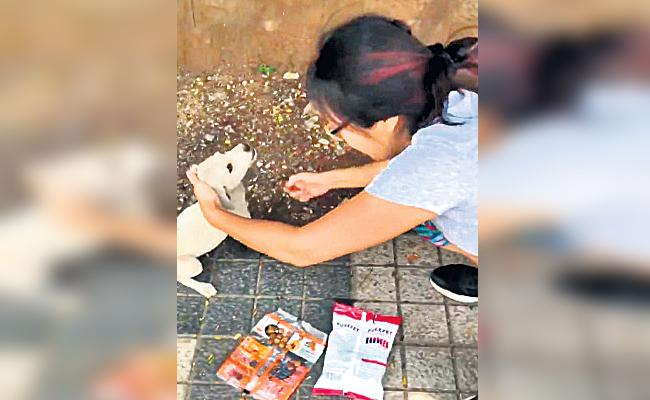 Andrew Fleming Wife Rescue Street Dog in Hyderabad - Sakshi