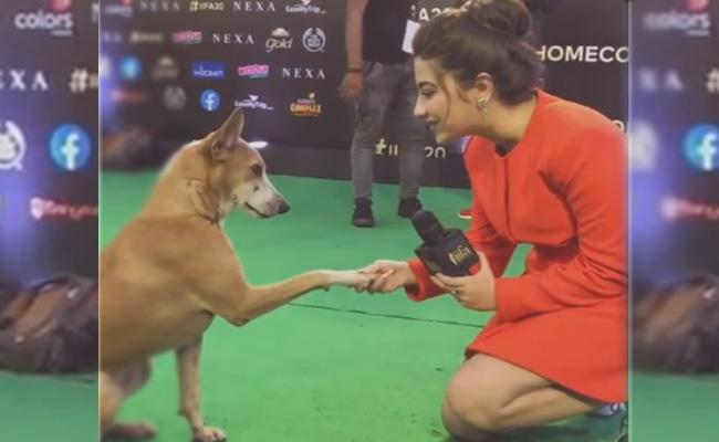 Actress Aditi Bhatia Interviews Dog In IIFA Awards - Sakshi