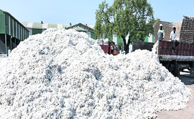 Cotton Production Increased In Adilabad District - Sakshi