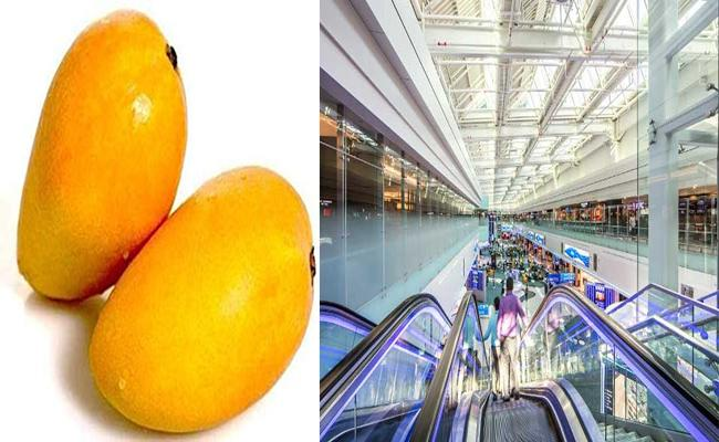 Indian Man Caught Stealing 2 Mangoes At Dubai Airport To Be Deported - Sakshi