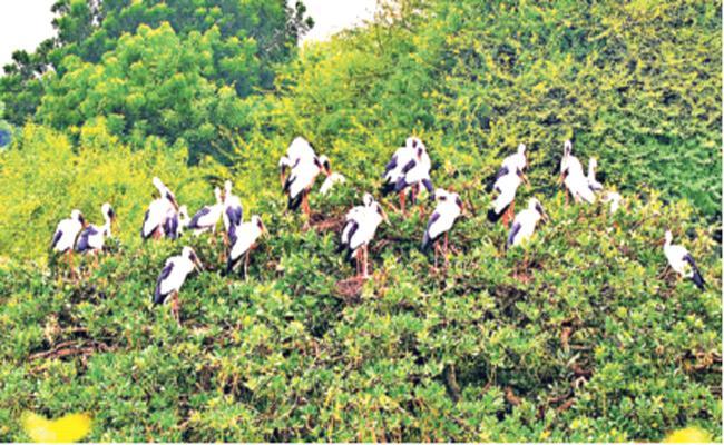 Foreign Birds Visit Starts in PSR Nellore - Sakshi