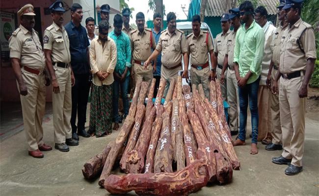 Police Arrested Red Sandalwood Smugglers And Seized Rs 37 Lakh Wood  In Chittoor - Sakshi