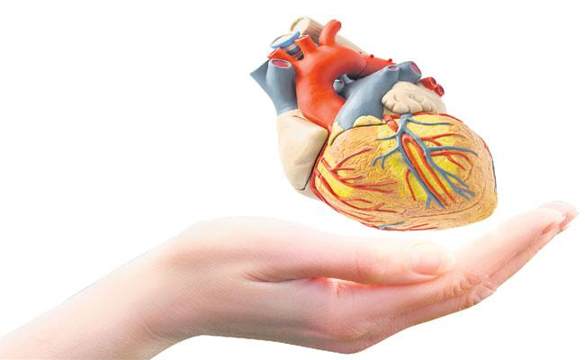 Nutrition to Be Taken To Prevent Heart Disease - Sakshi