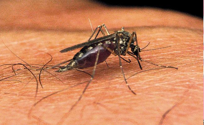 High Court Serious On Telangana Government Over Dengue - Sakshi