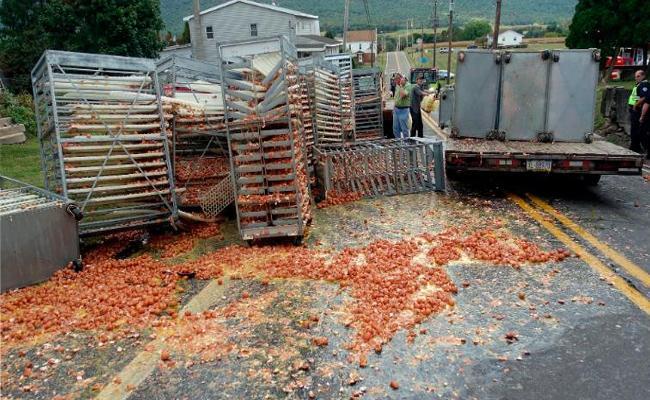136000 Eggs Falling Off Truck In Pennsylvania Highway - Sakshi