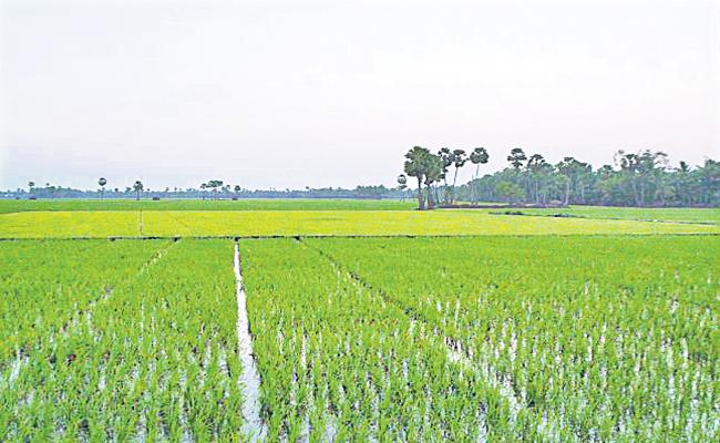 Southwest Monsoon helps Kharif Crops - Sakshi