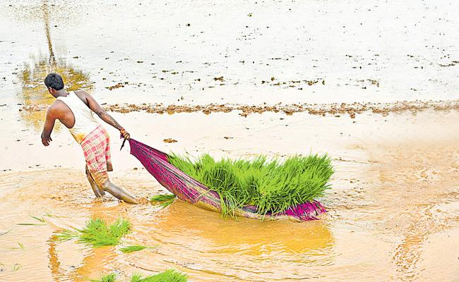 Cultivation of Kharif crops has exceeded one crore of acres - Sakshi