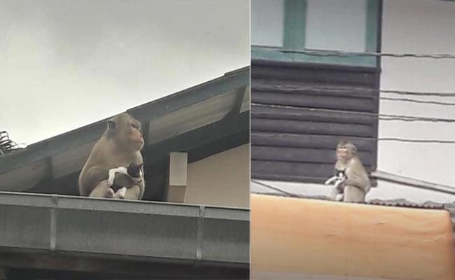 Monkey Tries Feeding  Banana To Kitten In thailand - Sakshi