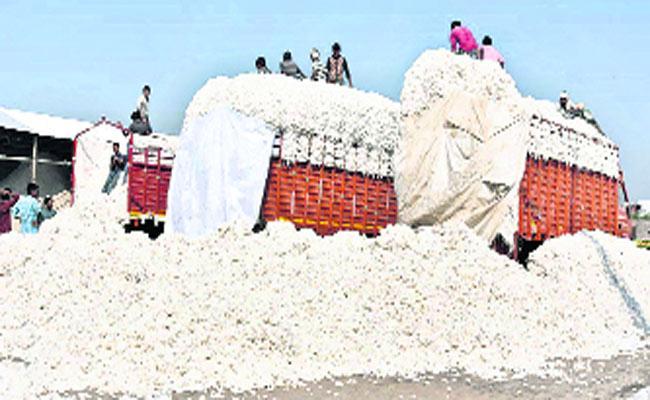 cotton Corporation India Feedback On Jammikunta Cotton market - Sakshi