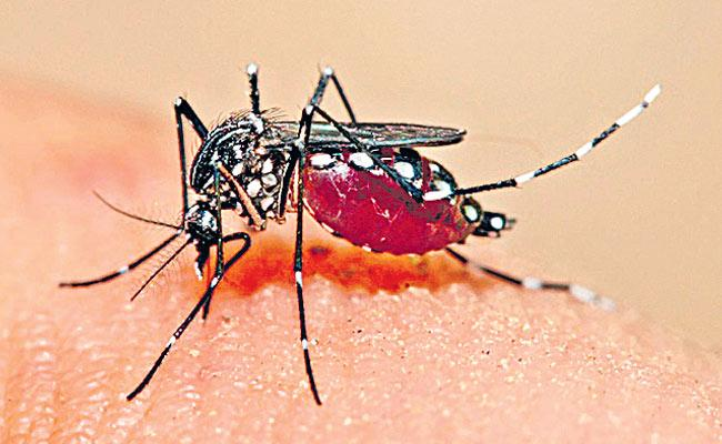 Dengue Is The most Common In Children Telangana - Sakshi