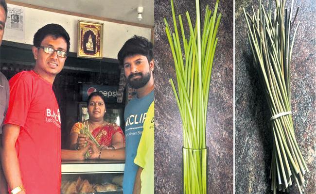 Free Castor Plant Straws Distributing in Karnataka - Sakshi