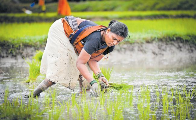 Kharif crop cultivation season was ended - Sakshi