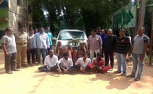 Tamil Smugglers Caught At Alipiri - Sakshi