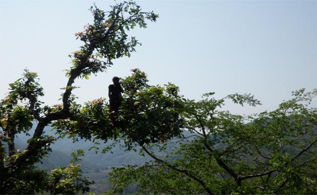 Insane Woman Climbs Tree And Creates Ruckus - Sakshi