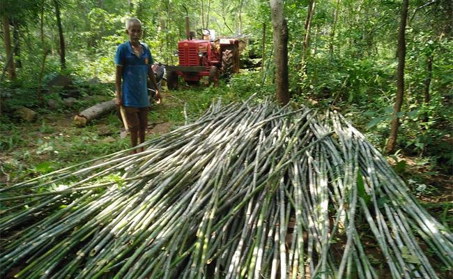 Bamboo Business Started In Nallamala Forest Becoming Irregularity  - Sakshi