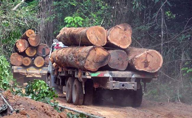 Eluru Divisional Manager Suspended For Illegal Logging Of Wood - Sakshi