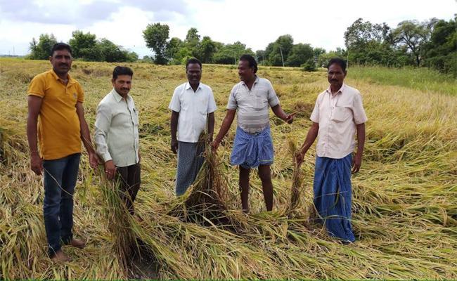 Crops damaged With heavy Rains in Karimnagar - Sakshi