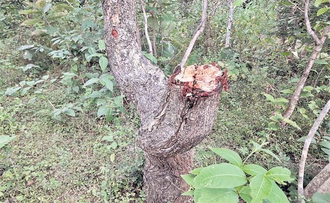 Deforestation in Medak District - Sakshi