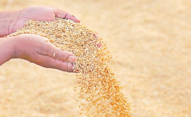 Authorities decided to implement the Grain buying centers statewide - Sakshi
