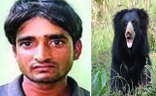 Tiger Poacher Who Killed Bears To Eat Their Genitals Arrested In Madhya Pradesh - Sakshi