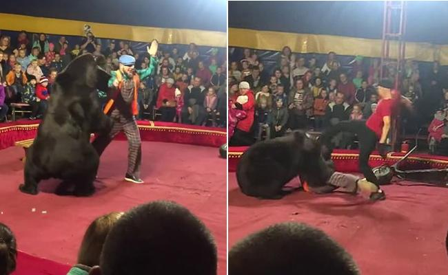 Circus Bear Attacks Russian Trainer - Sakshi