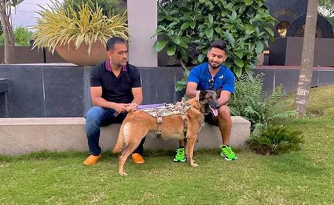 Pant Relishes Good Vibes With MS Dhoni And His Dogs - Sakshi