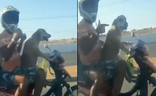 Viral Video Dog Drives Bike In Brazil - Sakshi