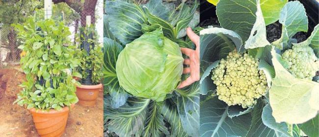 Winter home crops - Sakshi