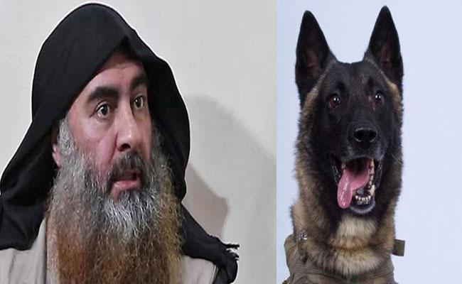 Trump Shares Military Dog Photo Says It Chased ISIS Chief Baghdadi - Sakshi
