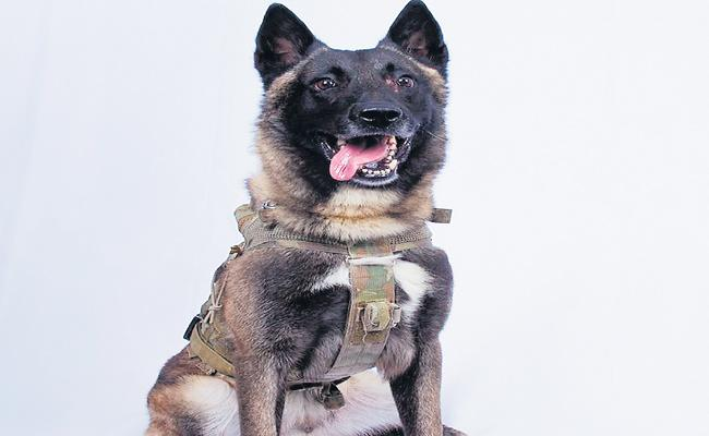 Trump Tweeted A Photo Of K9 Dog Which Helped In Baghdadi's Death - Sakshi