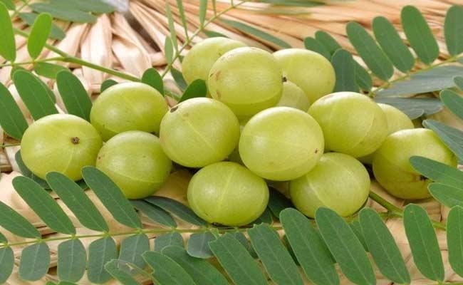 Importance Of Amla In Karthika Masam - Sakshi
