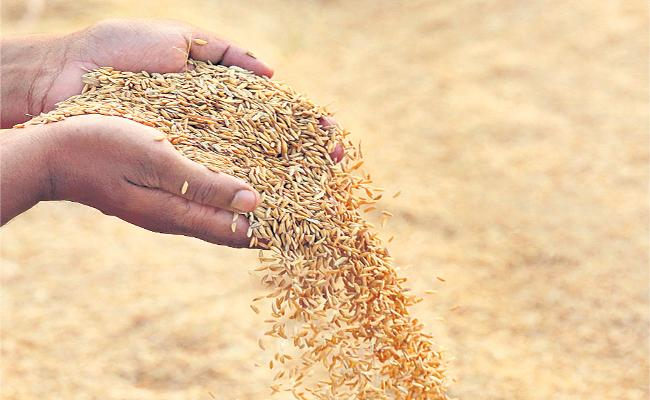 Paddy Production Overcome 21 Years Record In Telangana - Sakshi