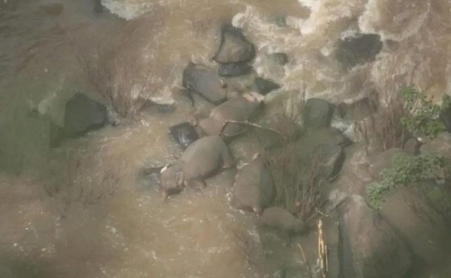Six Elephants Die Trying To Save Each Other In Thailand - Sakshi