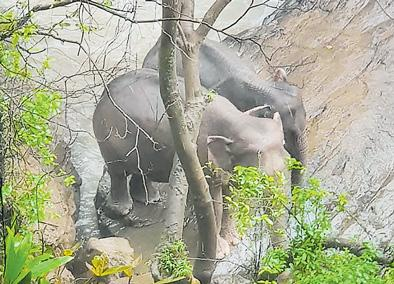 Six elephants die trying to save each other at Thai waterfall - Sakshi