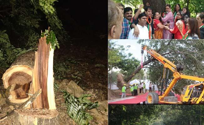 No Further Cutting Of Trees Needed says Supreme court  - Sakshi